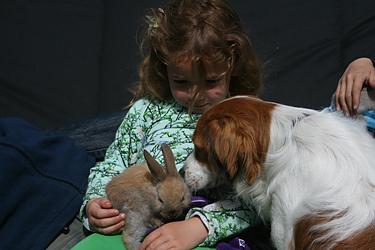 Farmcamps konijntjes verzorgen
