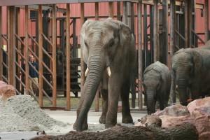 olifantentransport_beekse_bergen