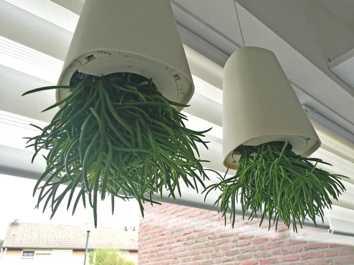 kantoorinrichting kantoor aan huis met planten