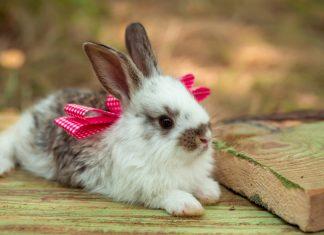 dierendag konijntjes