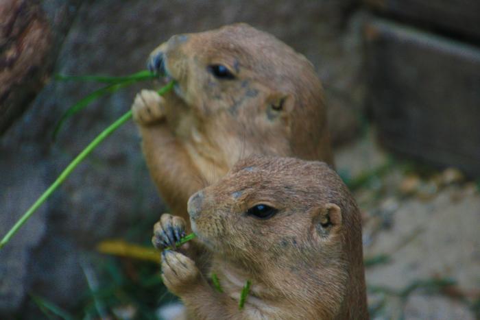 hannover citytrip met kinderen erlebnis zoo