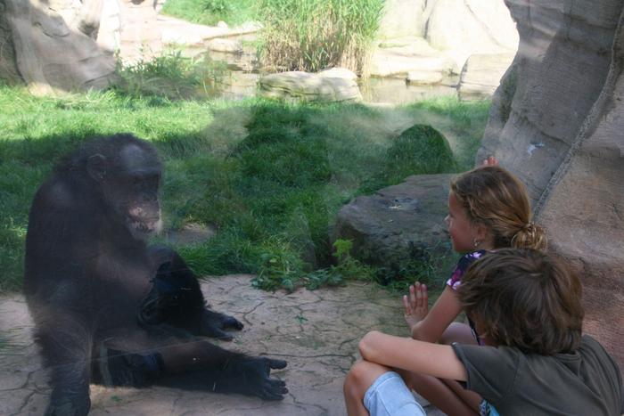 hannover citytrip met kinderen erlebnis zoo aap