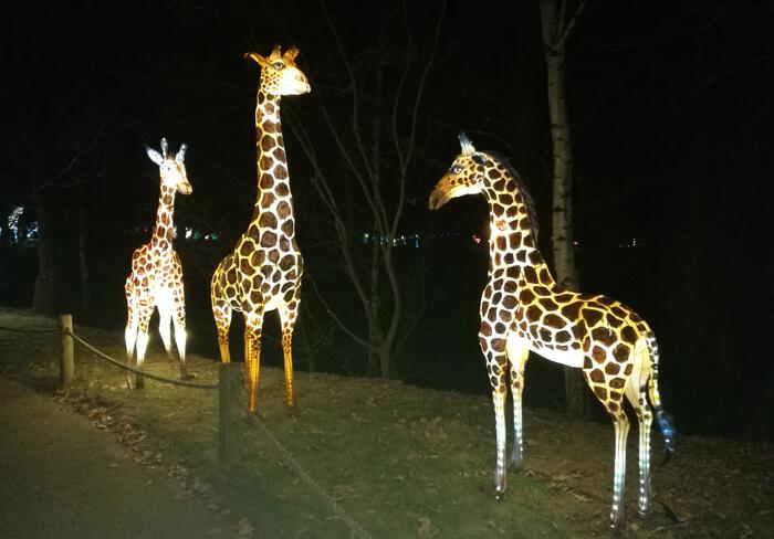 Africa by Light giraf
