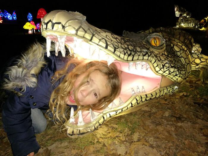 Africa by Light krokodil
