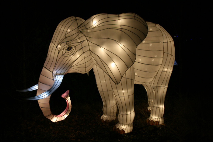 Africa by Light olifant