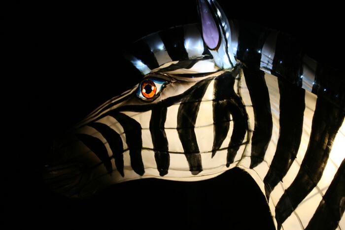 Africa by Light zebra