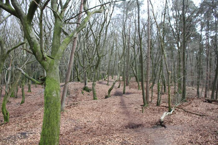 beeldentuin garderen bos