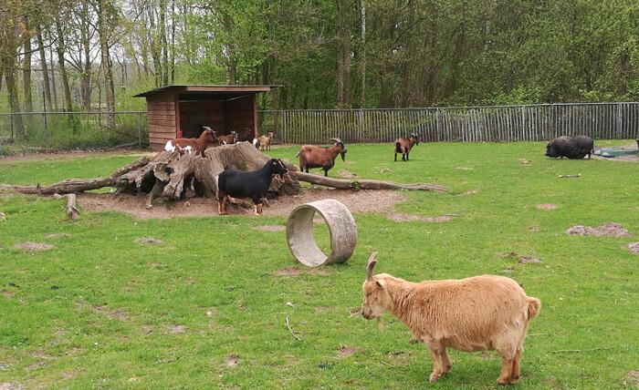 vakantiepark Dierenbos Vinkel, dierenparkjes