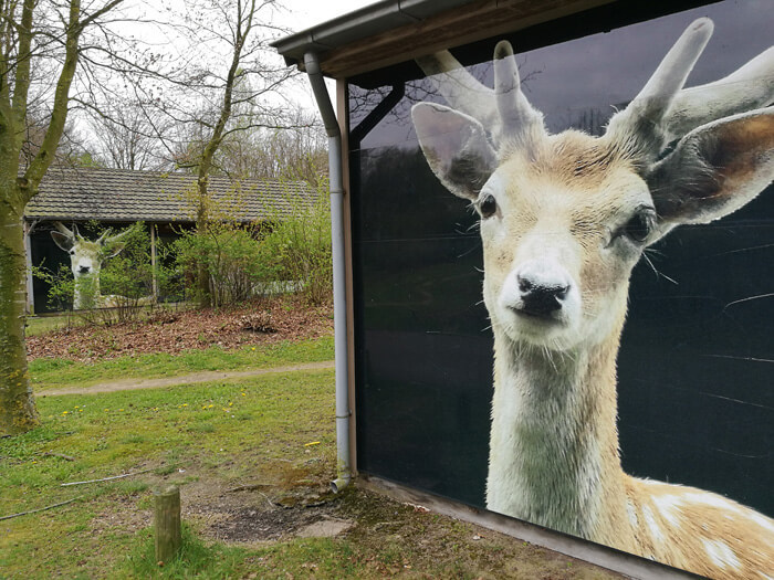 vakantiepark dierenbos vinkel damhert huisje