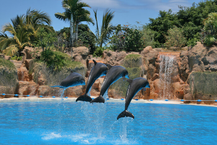 tenerife met kinderen, dolfijnen in Loro Parque