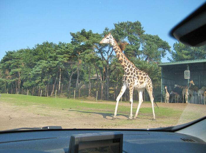 dierentuinen nederland, safaripark