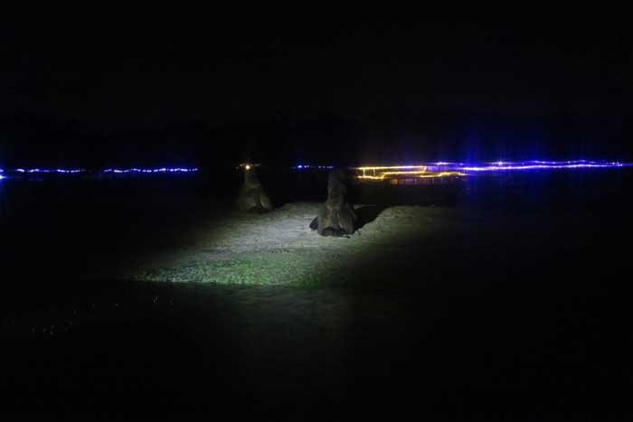 winterdroom nachtsafari dromedaris
