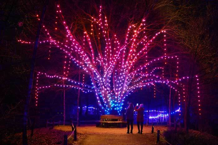 winterdroom tree of light