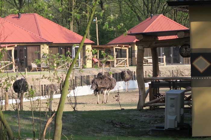safari resort beekse bergen huisje struisvogels