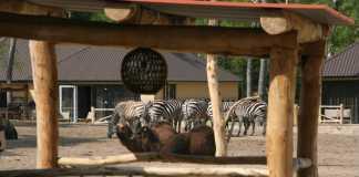 safari resort beekse bergen uitzicht huisje