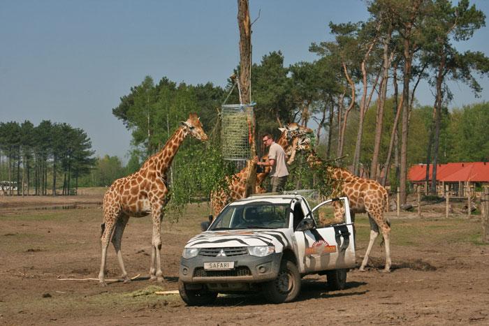 safari resort beekse bergen dieren voeren