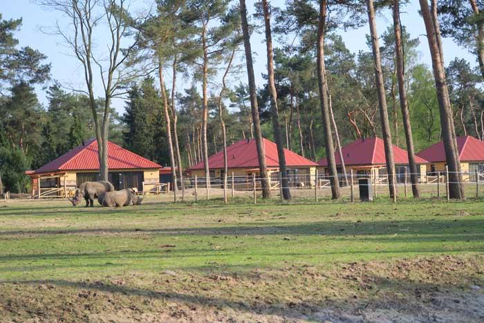 safari resort neushoorns