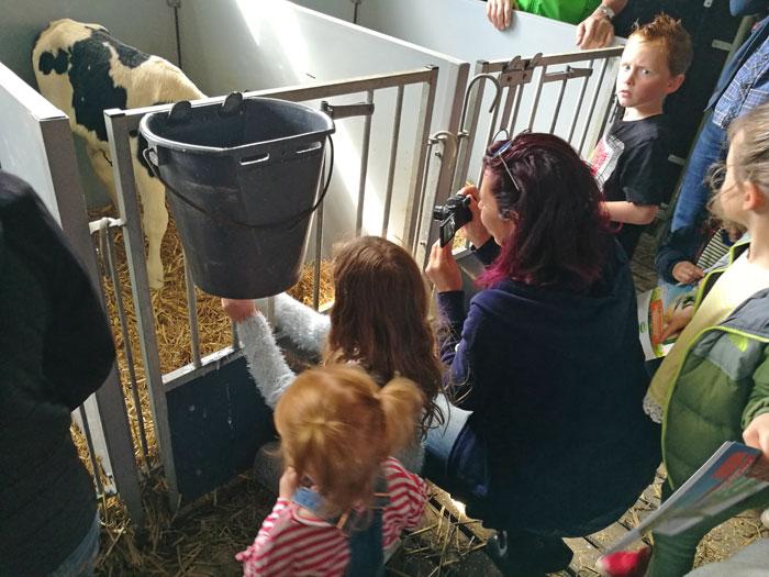 kalfjes kijken campina boerderijdagen