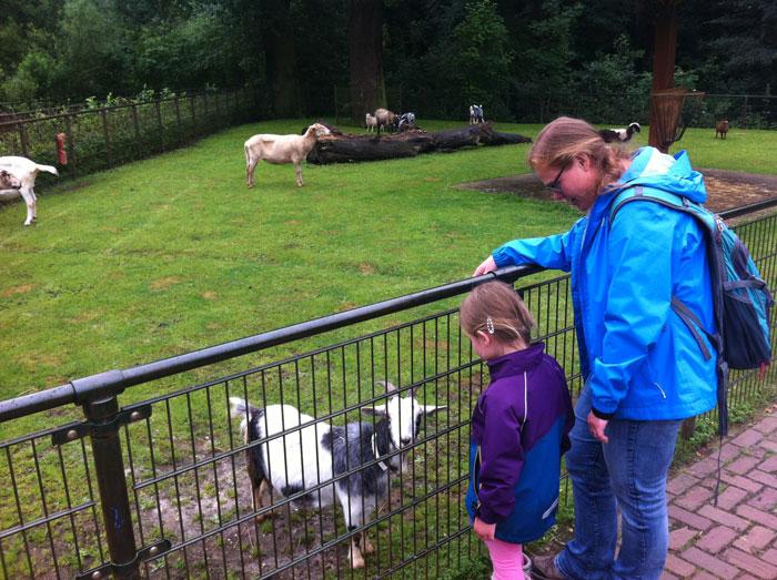 kinderboerderij weizigtpark