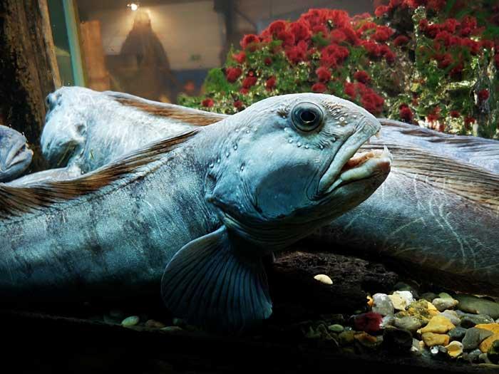 aquarium jyllandsakvariet