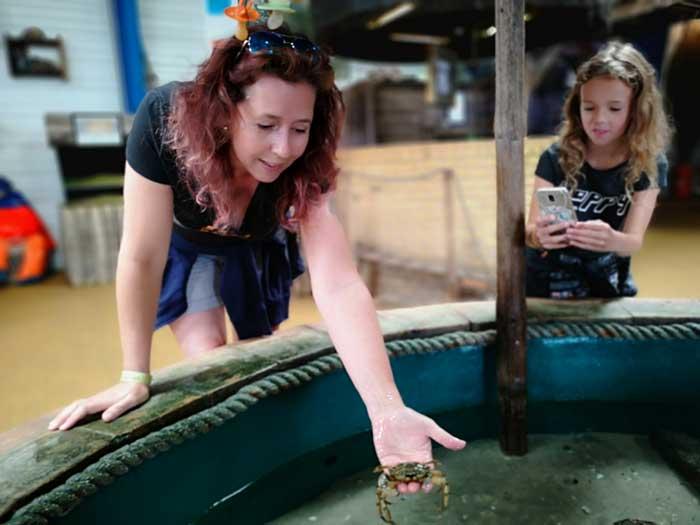 krab vasthouden jyllandsakvariet