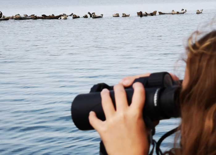 zeehondensafari denemarken