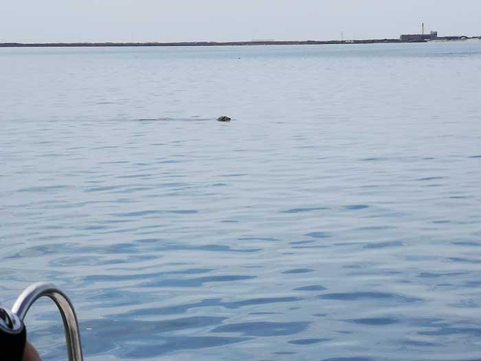 zeehondensafari jyllandsakvariet
