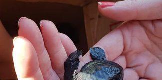 handje helpen schildpad in zee zetten