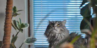 niet giftige planten voor katten