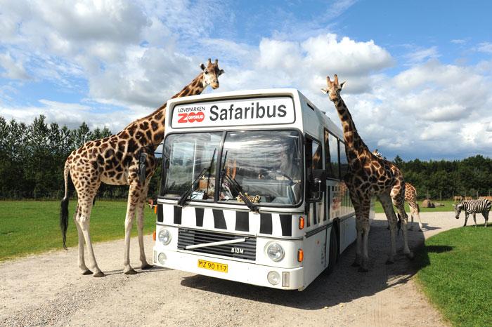 zuid denemarken Givskud Zoo