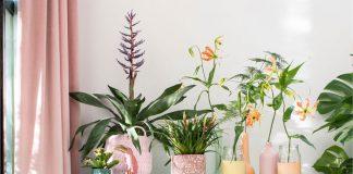 plant trend rainbow pastel