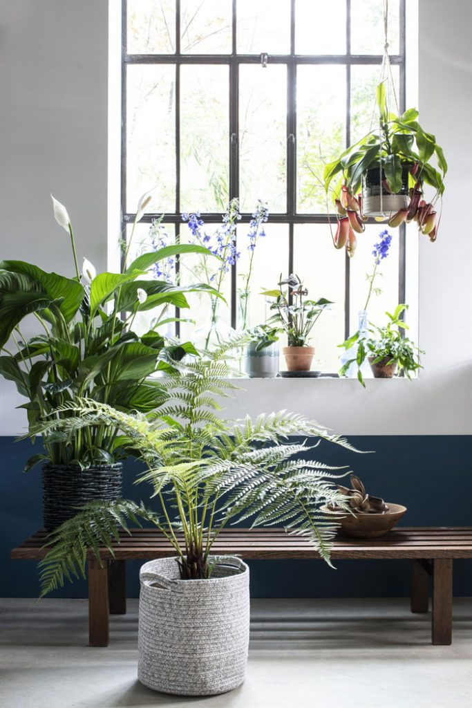 plant trend into the wild