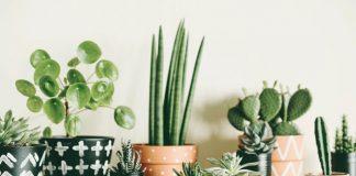 planten die weining water nodig hebben
