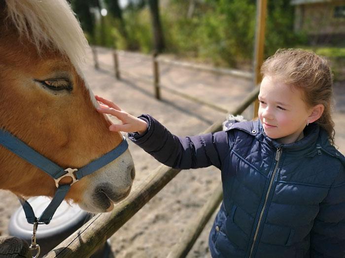 pony aaien landal park het land van bartje