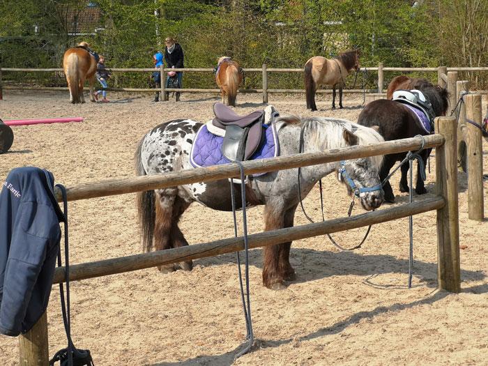 pony ranch swieber, landal