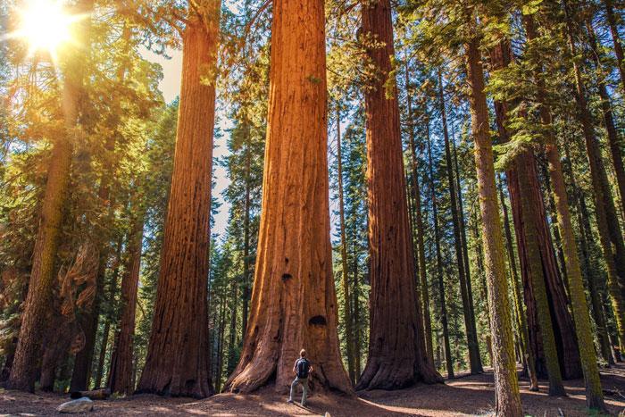 sequoia national park, mooiste plekken amerika