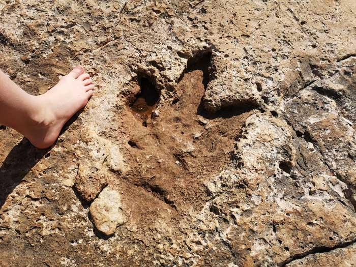 dinosauris voetafdruk brijuni national park