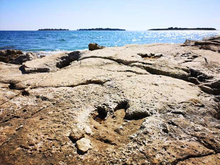 footprint dinosaurs brijuni kroatie