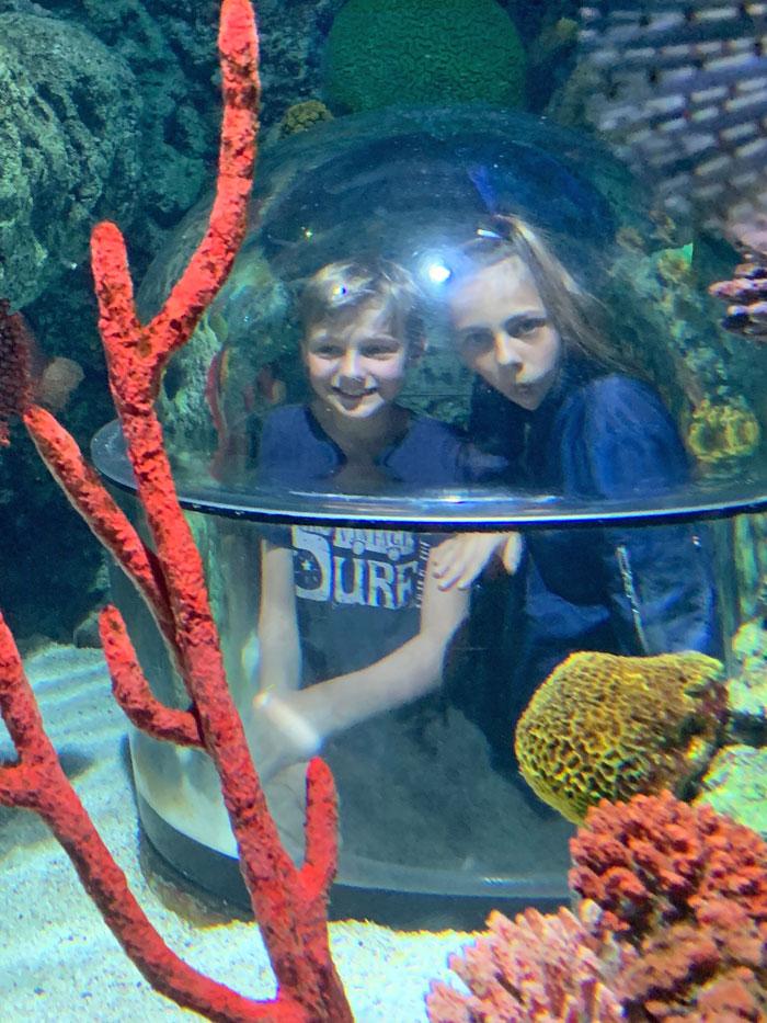 onderwaterwereld museum zuid denemarken