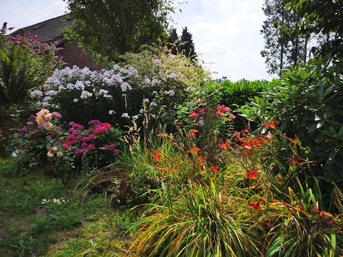 jardin sauvage met bloemen