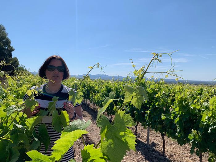wijngebied Costa Daurada