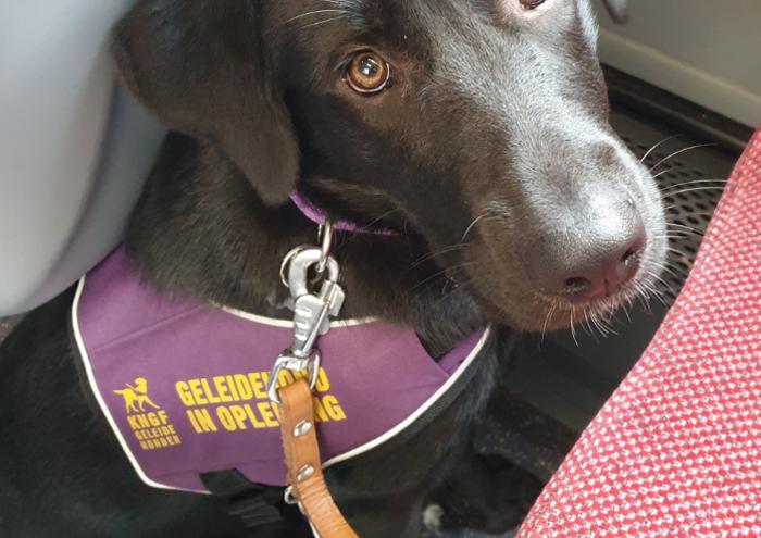 spup, sponsor een pup