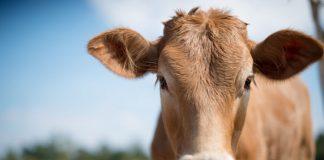bewust vlees eten, crowdbutching