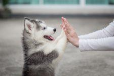 een puppy kopen