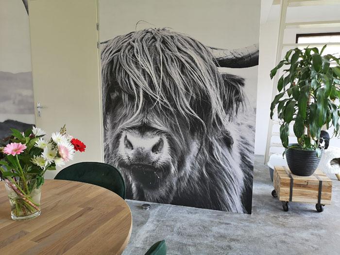 Fotobehang van Schotse Hooglander