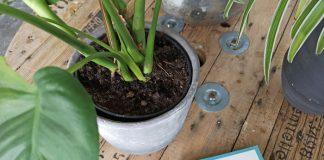 planten verzorgen boek