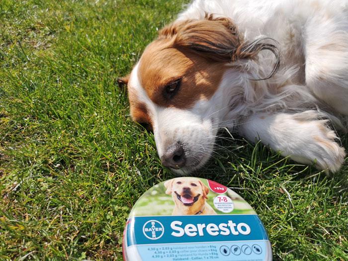 seresto halsband voor je hond
