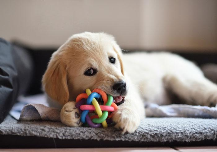 welke spullen heb je nodig voor een hond