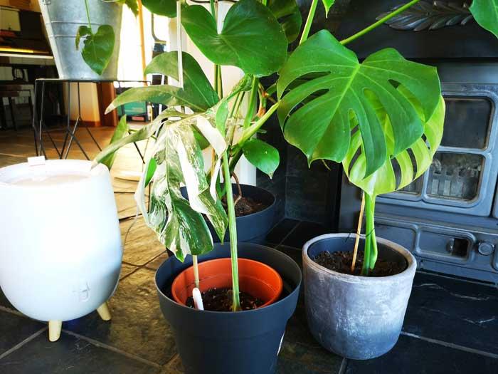 luchtbevochtiger planten, duux ovi luchtbevochtiger