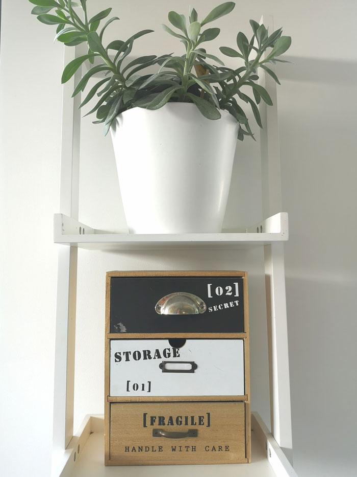 Kruiskruid als bureau plant